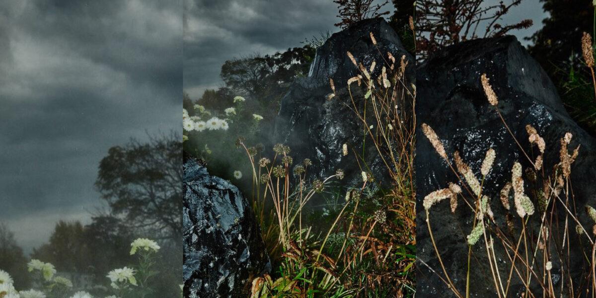 Detailaufnahme zarte Pflanzen vor dunklem, nassem Gesteinund Gestein.